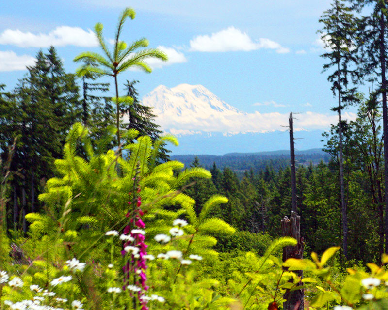 In the Capitol State Forest. Mt.Rainier in the distance.