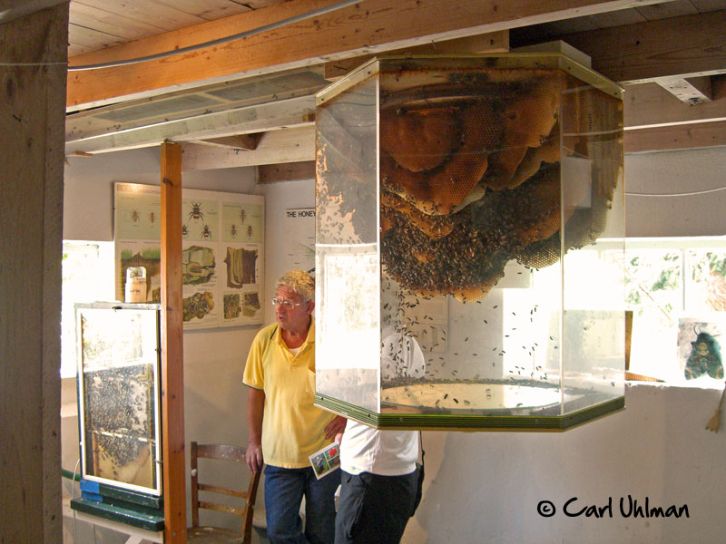 Observation Hives Archives Honey Bee Suite