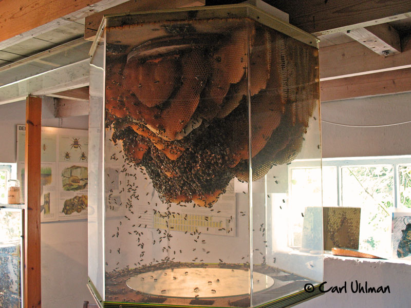 Wood Plan: Native bee hive construction