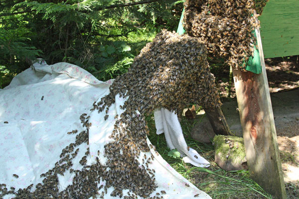 Bees-crawling-up-sheet