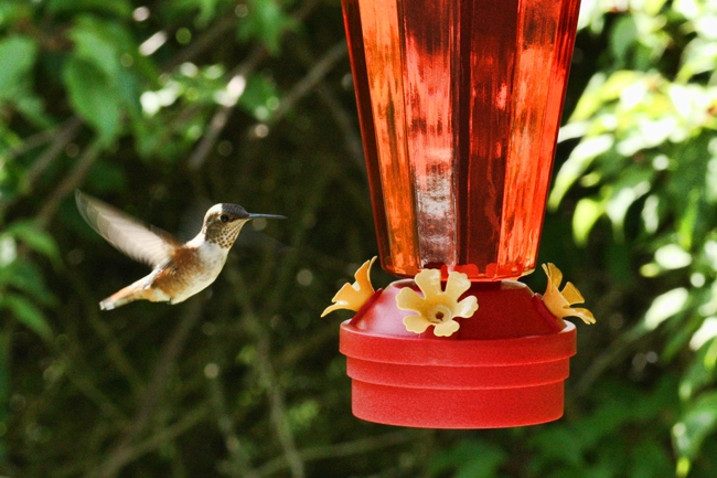Let the hummingbirds eat in peace. © Rusty Burlew.