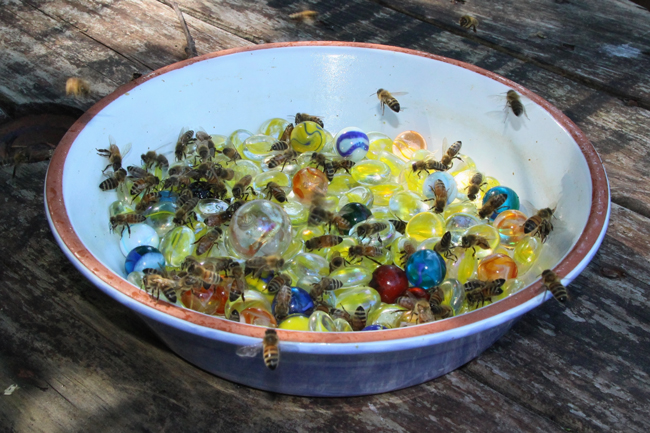 Marbles-in-water-for-bees
