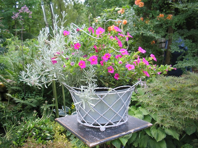 Flower pot with cosmos