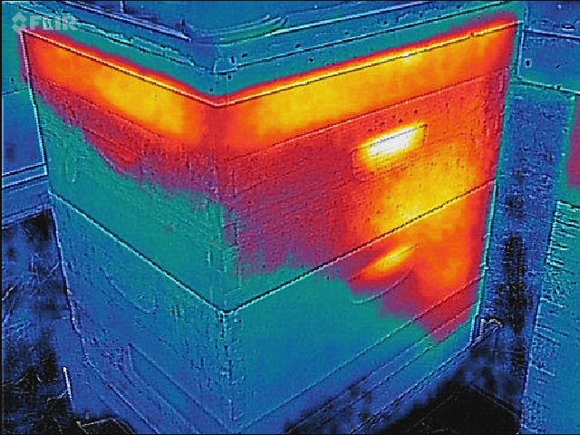 Thermal Images Of Winter Bees Honey Bee Suite