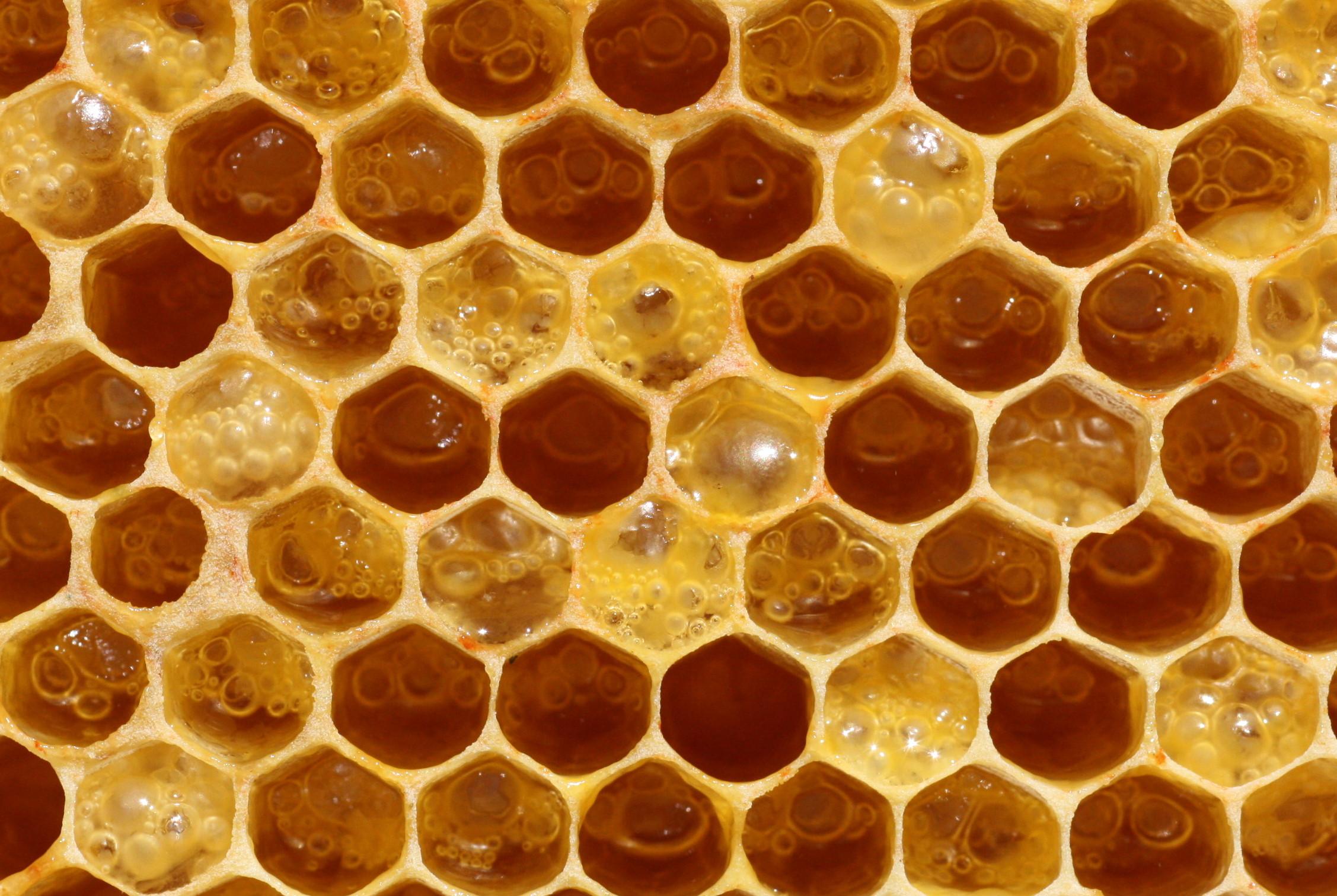 Fermenting-honey.jpg