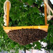 swarm on a swing