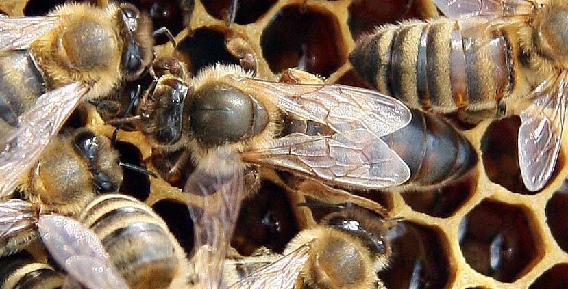 Never trust a queen - Honey Bee Suite - photo#7