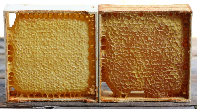 www.honeybeesuite.com