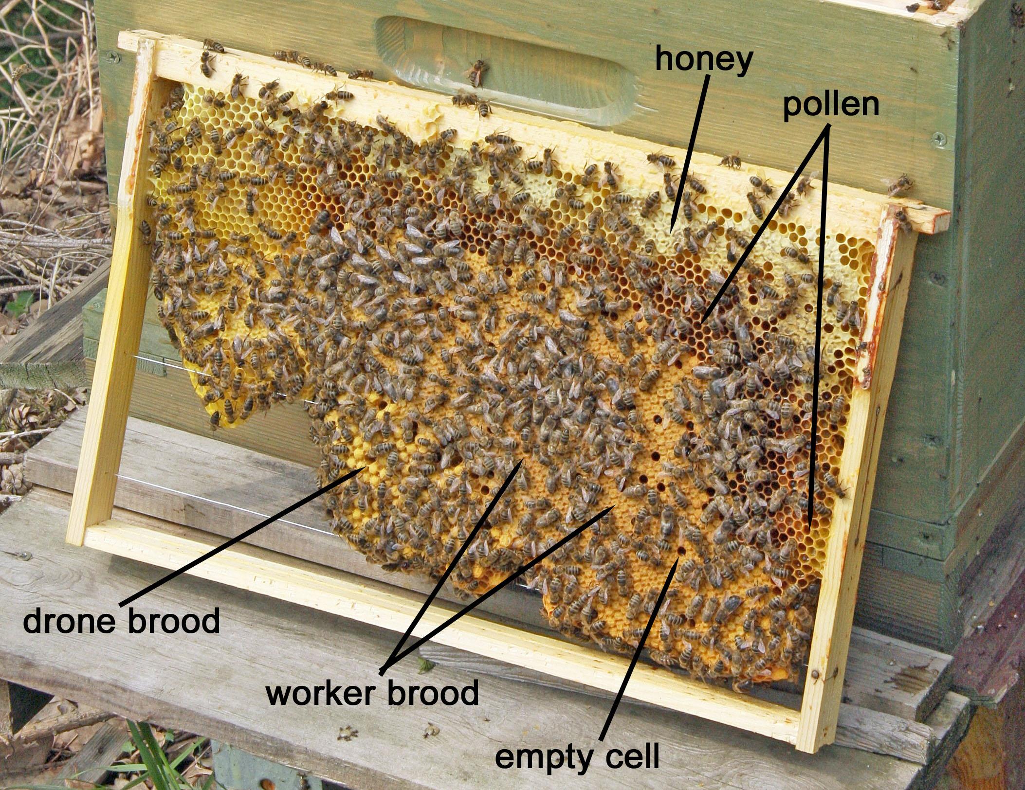 Collecting This Honey Oddlysatisfying