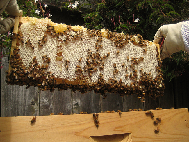 how much honey do bees need for winter