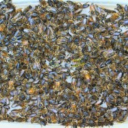 Bees-on-a-sugar-tray