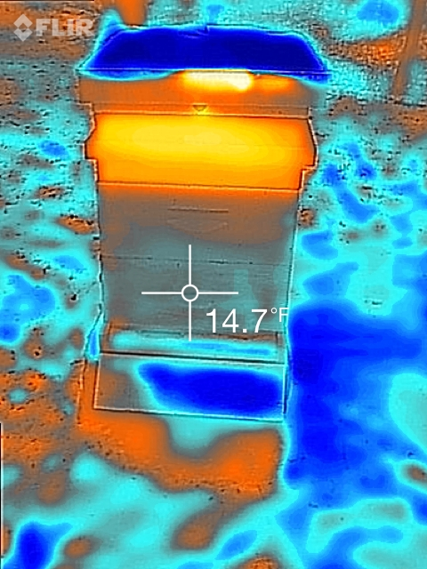 Flir image of February hive Jenny McComb