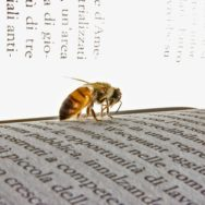 Bee on book.