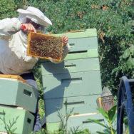 Tippy-hives. -Pixabay